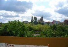 Die gefällten Bäume des Schlossparks am 18. Mai 2005